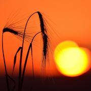 Photo nature, par Alain Blaise