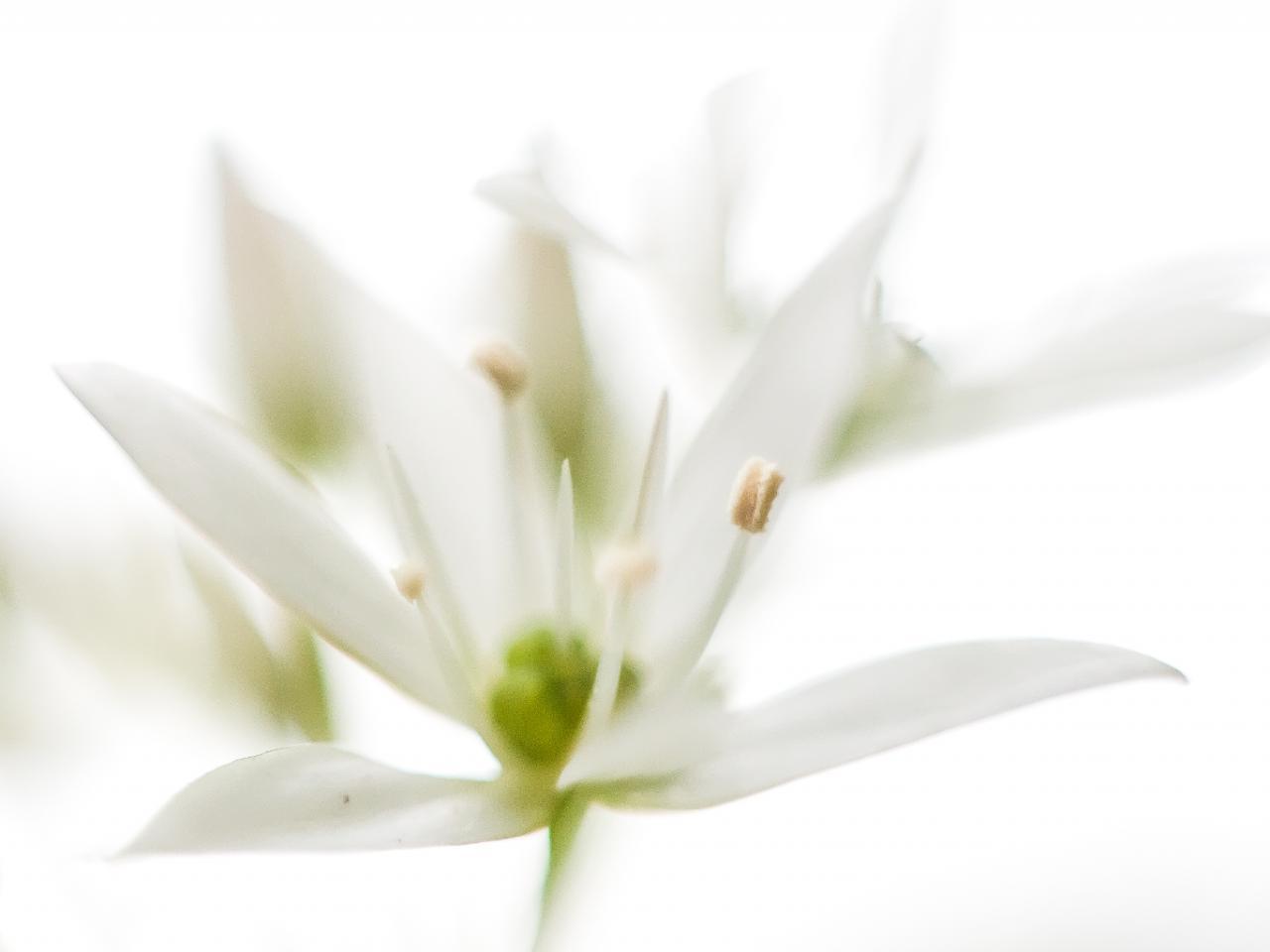Symphonie en sol fleuri, par Francine Koeller